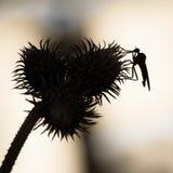 Tło z osetem i insektem w czarny i biały Insekt ov ilustracja wektor