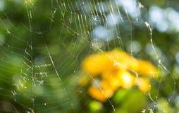 Tło z pająk siecią obrazy stock