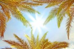 tło z palmowymi gałąź Obraz Stock