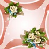 Tło z pięknymi biały różami Zdjęcia Royalty Free