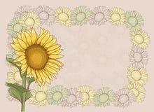 Tło z słonecznikami Obrazy Royalty Free