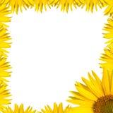 Słonecznik granicy projekt Obrazy Royalty Free