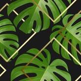 Tło z tropikalnymi palmowymi liśćmi Egzotyczne tropikalne rośliny Obrazy Royalty Free