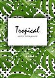 Tło z tropikalnymi palmowymi liśćmi Egzotyczne tropikalne rośliny Zdjęcia Royalty Free