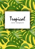 Tło z tropikalnymi palmowymi liśćmi Egzotyczne tropikalne rośliny Fotografia Stock
