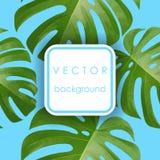 Tło z tropikalnymi palmowymi liśćmi Egzotyczne tropikalne rośliny Obraz Stock