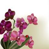 Tło z wektorowymi storczykowymi kwiatami Zdjęcia Royalty Free