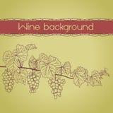 Tło z winorośl konturem z winogronami ilustracji