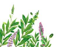 Tło z zieleni menchii i liści kwiatów ręką malował z nafcianymi kredkami Fotografia Royalty Free
