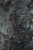 Tło, zakończenie palący drewno Przypalający drzewo, burnt drewniana tekstura Fotografia Stock