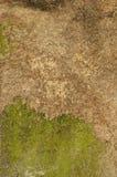 tło zakrywająca mech dykta Obrazy Stock