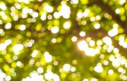 tło zamazujący zielony naturalny Fotografia Royalty Free