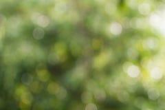 tło zamazujący zielony naturalny Obraz Stock