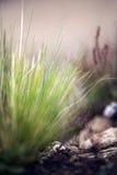tło zamazywał koloru ziemi liść roślinność Fotografia Stock