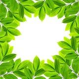 tło zieleń opuszczać biel Obraz Royalty Free