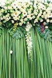 Tło zieleni i biały kwiaty fotografia royalty free