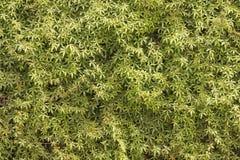 Tło zieleni i koloru żółtego liście Obraz Stock