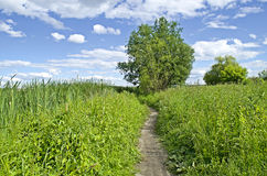 tło zieleni krajobrazu natury nowożytny wektor Zdjęcie Stock