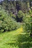 tło zieleni krajobrazu natury nowożytny wektor Obraz Royalty Free