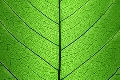Tło Zielona liść komórki struktura - naturalna tekstura Obraz Royalty Free