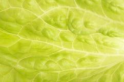 Tło zielona liść sałata Obrazy Stock