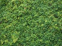Tło zielona roślina Zdjęcia Stock