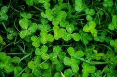 Tło zielona soczysta trawa na łące w lecie, selekcyjna ostrość obraz stock