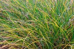 Tło zielona trawa fotografia stock