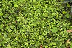 Tło - zielony porośle kilka gatunki paprocie zdjęcie stock