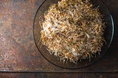 Tło zielony pszenicznego zarazka zbliżenie, zdrowy jedzenie Fotografia Stock