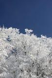 tło zima błękitny biały Fotografia Royalty Free