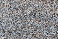 Tło zrobił †‹â€ ‹seashells Fotografia Stock