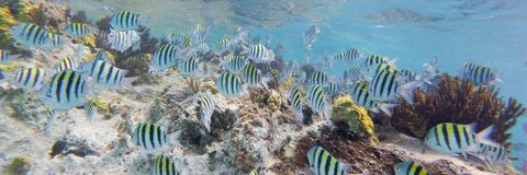 Tłum ryba podczas gdy snorkeling w pięknej lagunie Fotografia Royalty Free