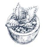 Tłustoszowata roślina w garnku Zdjęcie Stock