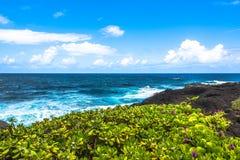 Tłustoszowate rośliny wzdłuż Haleakala wybrzeża, Maui, Hawaje Obraz Royalty Free