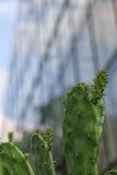 Tłustoszowaty szkło Fotografia Stock