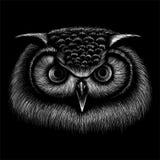 T恤杉设计的传染媒介商标猫头鹰或穿破 免版税库存图片