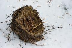 T упаденной старой птицы в снеге Стоковое Фото