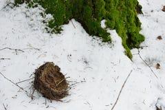 T упаденной старой птицы в снеге Стоковая Фотография RF
