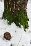 T упаденной старой птицы в снеге Стоковые Изображения RF