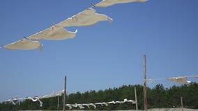 垂悬白色的T恤杉烘干 影视素材