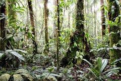 For?t amazonienne tropicale Colombie photos libres de droits