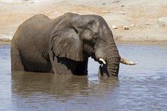 tät elefant som upp plattforer waterhole royaltyfri bild