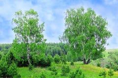 tła Baikal brzozy jeziora drzewo Obraz Royalty Free