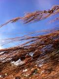 tła Baikal jeziora sosna Zdjęcie Stock