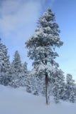 tła Baikal jeziora sosna Obraz Royalty Free