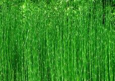 tła bambusa natura obrazy stock