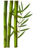 tła bambusa odosobniony biel Fotografia Stock