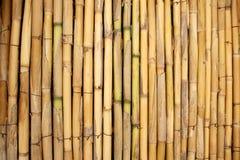 tła bambusowy ilustracyjny badyli wektor Zdjęcie Stock