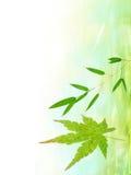 tła bambusowy Japan urlop klon Fotografia Royalty Free